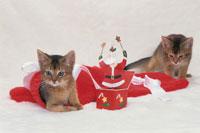 2匹のネコとクリスマス