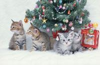 4匹のネコとツリー