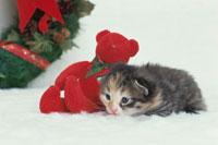 ネコとクリスマス
