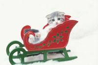 ソリに乗るネコ