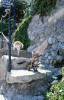 2匹のネコと階段