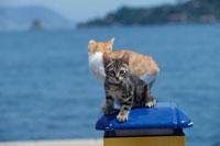 2匹のネコと海