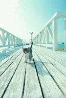 桟橋のネコ 21030000337| 写真素材・ストックフォト・画像・イラスト素材|アマナイメージズ