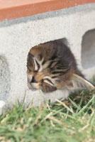 ブロックの中のネコ
