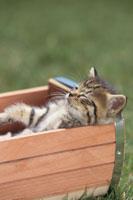 箱の中で眠るネコ