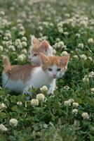 2匹のネコと花