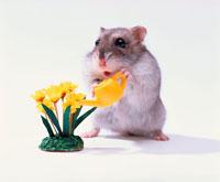 花に水をあげるジャンガリアンハムスター