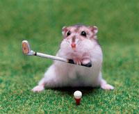 ゴルフをするジャンガリアンハムスター