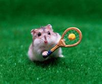 テニスをするジャンガリアンハムスター