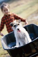 手押し車に犬を乗せて押す少女