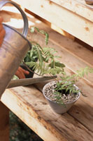 ガーデニング鉢植に水をやるジョウロ