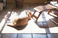 ひなたぼっこしている犬