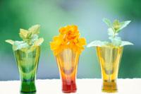 緑・オレンジ・黄グラスにミント・キバナコスモス
