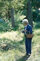 森の中で花を摘む女性 21069000024B| 写真素材・ストックフォト・画像・イラスト素材|アマナイメージズ