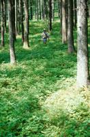森の中の男性 21069000190E| 写真素材・ストックフォト・画像・イラスト素材|アマナイメージズ