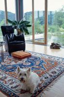 リビングルームと犬