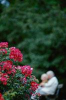 赤い花とベンチに座る老夫婦