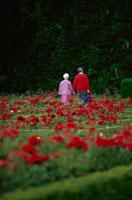 花壇の中を歩くシニア夫婦 21069000333| 写真素材・ストックフォト・画像・イラスト素材|アマナイメージズ