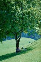 木陰で休む外国人カップル