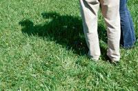 芝生の上の影