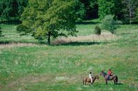 草原で馬に乗る人