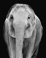 象 21075000035| 写真素材・ストックフォト・画像・イラスト素材|アマナイメージズ