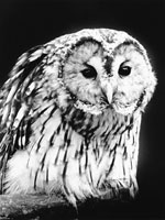 フクロウ 21075000064| 写真素材・ストックフォト・画像・イラスト素材|アマナイメージズ