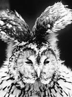 フクロウ 21075000065  写真素材・ストックフォト・画像・イラスト素材 アマナイメージズ