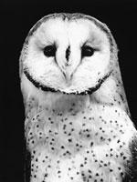 フクロウ 21075000066| 写真素材・ストックフォト・画像・イラスト素材|アマナイメージズ