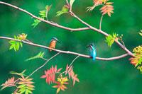 紅葉の枝にとまるカワセミ 21083000290| 写真素材・ストックフォト・画像・イラスト素材|アマナイメージズ