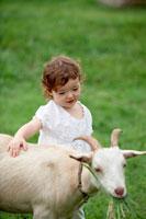 ヤギと遊ぶ女の子