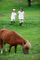 草原にいる馬と姉妹