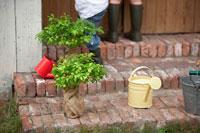 玄関の階段においた苗木と黄色いじょうろ 21086000600| 写真素材・ストックフォト・画像・イラスト素材|アマナイメージズ