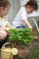 苗木と庭弄りをするハーフの姉妹