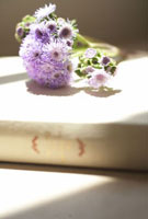 本の上に置いた植物