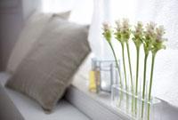 窓辺に飾った植物等