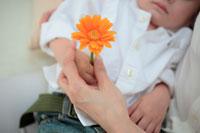 ガーベラを持つ子供と母の手元 21088000224| 写真素材・ストックフォト・画像・イラスト素材|アマナイメージズ