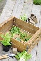 ガーデンイメージ 21090000065| 写真素材・ストックフォト・画像・イラスト素材|アマナイメージズ