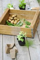 ガーデンイメージ 21090000066| 写真素材・ストックフォト・画像・イラスト素材|アマナイメージズ