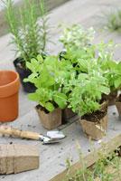 ガーデンイメージ 21090000119| 写真素材・ストックフォト・画像・イラスト素材|アマナイメージズ