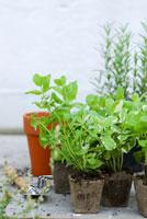 ガーデンイメージ 21090000123| 写真素材・ストックフォト・画像・イラスト素材|アマナイメージズ