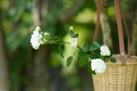 カゴに生けたバラ 21090000230| 写真素材・ストックフォト・画像・イラスト素材|アマナイメージズ