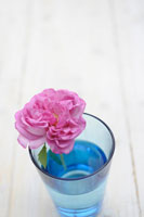 コップに生けたバラ
