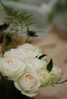 バラ 21090000903| 写真素材・ストックフォト・画像・イラスト素材|アマナイメージズ