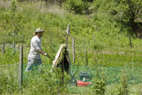 草刈をする男性