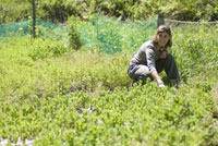 畑の中の女性