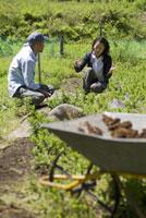 農作業をする男性と女性