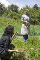 農作業をする女性2人