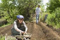 農作業をする男女