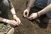 苗を植える男女